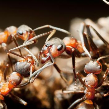 ants-control-johor-bahru