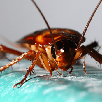 cockroach-control-johor-bahru