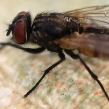 flies-control-johor-bahru