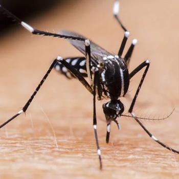 mosquitoes-control-johor-bahru