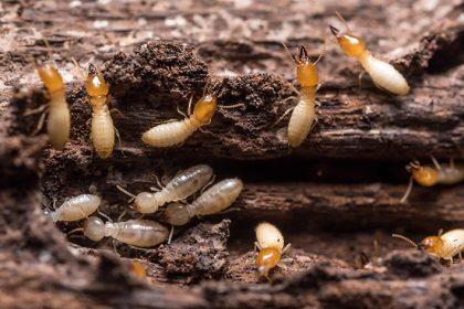 pest-control-johor-bahru-termite-extermination